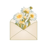 Envelope with white chamomile flowers Stock Photos