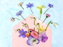 Enveloppe avec des fleurs de ressort Photos libres de droits