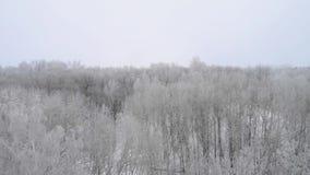 Envergure avec le bourdon au-dessus de la forêt d'hiver banque de vidéos