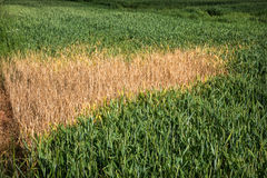 Enviromental Crop Damage Stock Images