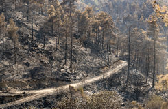 Enviromental damage after forest fire Stock Images