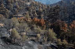 Enviromental damage after forest fire Stock Photos