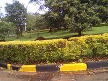 environment стоковое изображение rf