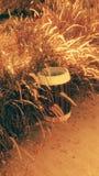 environment стоковые фотографии rf