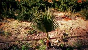 environment стоковая фотография rf