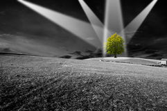 Environment. Landscape in black and white with green tree - the concept of ecology Stock Image