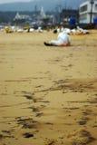 environment стоковая фотография
