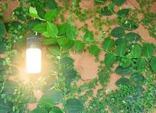 environment стоковое фото