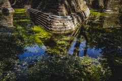 Environment, building in ruins on a green swamp with water Royalty Free Stock Photography