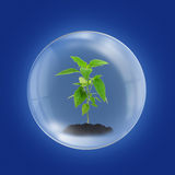 Environment concept. With young plant in glass sphere Stock Photography