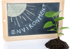 Environment concept with a green small plant and the sun Royalty Free Stock Photo