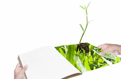 Environment concept hand with book and new life plant. White background Stock Photos