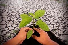 Environment concept,hand plant tree Stock Photos