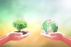Earth day concept. Two human hand holding earth globe and heart shape of tree - Elements of this image furnished by NASA Stock Photos