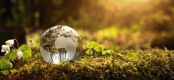 Environment conservation concept. Close up of glass globe in the forest with copy space Royalty Free Stock Photos