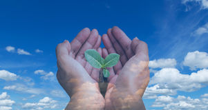 Environment conservative. Human hand hold on small tree on blue sky background stock photo