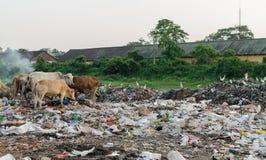 Environment degradation Stock Image