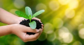 Environment Earth Day In the hands of trees growing seedlings. B royalty free stock photos