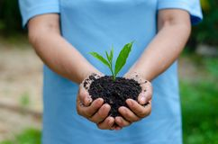Environment Earth Day In the hands of trees growing seedlings. Bokeh green Background Female hand holding tree on nature field gra stock image