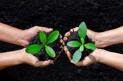 Environment Earth Day In the hands of trees growing seedlings. Bokeh green Background Female hand holding tree on nature field stock photography