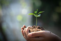 Environment Earth Day In the hands of trees growing seedlings. Bokeh green Background Female hand holding tree on nature field royalty free stock photos