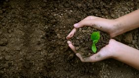 Environment Earth Day In the hands of trees growing seedlings. Bokeh green Background Female hand holding tree on nature field stock images