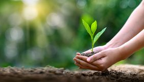 Environment Earth Day In the hands of trees growing seedlings. Bokeh green Background Female hand holding tree on nature field
