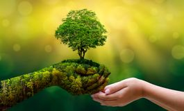 Environment Earth Day In the hands of trees growing seedlings. Bokeh green Background Female hand holding tree on nature field gra