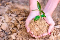 Environment Earth Day In the hands of trees growing seedlings. royalty free stock images