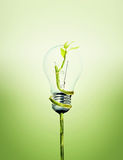Environment friendly bulb. Picture of an Environment friendly bulb Royalty Free Stock Photography