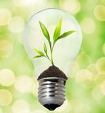 Environment friendly bulb Royalty Free Stock Photography