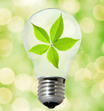 Environment friendly bulb. Picture of an Environment friendly bulb Royalty Free Stock Images