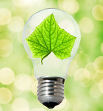 Environment friendly bulb Stock Image