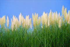 Environment-friendly reeds Stock Photography