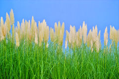 Environment-friendly reeds Royalty Free Stock Photos