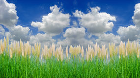 Environment-friendly reeds Royalty Free Stock Images