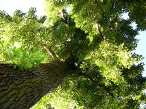 environment green tree with treetrunk Stock Photo