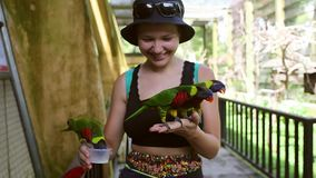 Environment human and nature concept, Parrot bird on young girl hand, Smiling woman playing with her bird pet. stock video footage