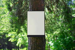 Environment and nature concept - empty board on tree Royalty Free Stock Images