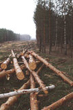 Environment, nature and deforestation forest concept Royalty Free Stock Images