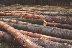 Environment, nature and deforestation forest concept Stock Photo