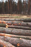 Environment, nature and deforestation forest concept Stock Photos