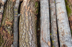 Environment, nature and deforestation forest - felling of trees. The concept of a global problem. Background of cut tree Royalty Free Stock Photography