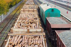 Environment, nature and deforestation forest - felling of trees. The concept of a global problem. Freight train loaded Stock Images