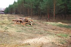 Environment, nature and deforestation forest - felling trees. Environment, nature and deforestation forest - felling of trees royalty free stock photo