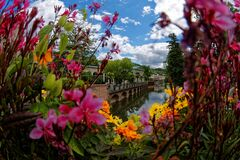 View through summer flowers to historic town landmark at river
