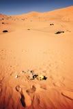 Environment pollution, Sahara desert Stock Photography