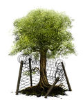Environment protection. A digital painting, illustrating the protection of nature. A single tree and its surrounding piece of nature are protected by a barbed stock illustration