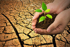 Environment Protection Concept. New life in hand over cracked earth,Concept Stock Photography