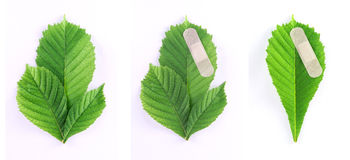 Environment protection - Set of three green leaves Royalty Free Stock Photography